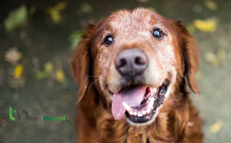 Köpek Yaralanmalarında Ne Yapılmalıdır?
