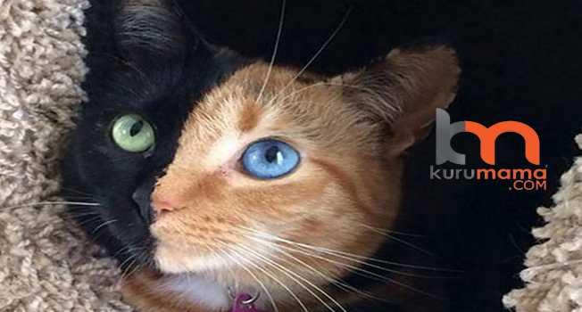Kedi Yaşı Nasıl Hesaplanır?