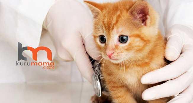 kedilere ilaç verme