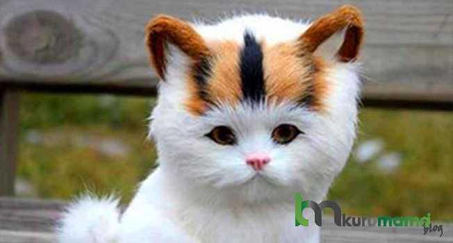 Kedilerin Rutin Bakımı