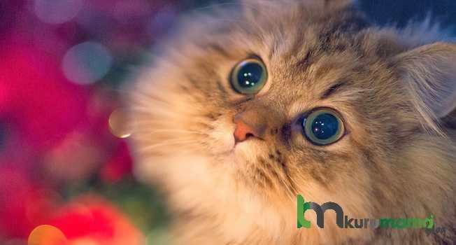 Kedilerin uzun yaşaması için 18 öneri