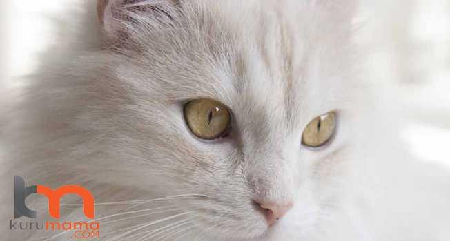 Kedinin Yaşı Neden Önemlidir?