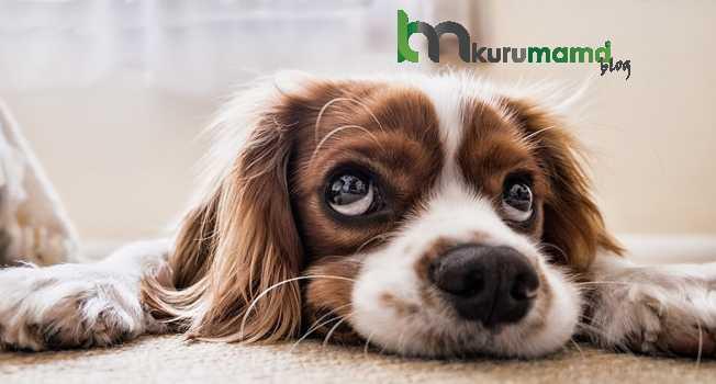 Köpeklerde Meydana Gelebilen Hastalıklar
