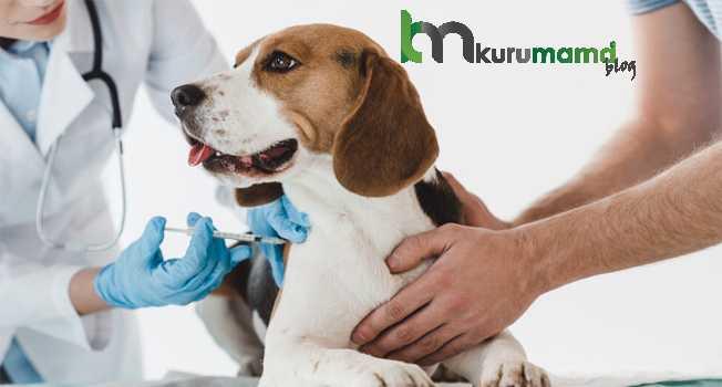 Köpeklere kaç tane aşı yapılır