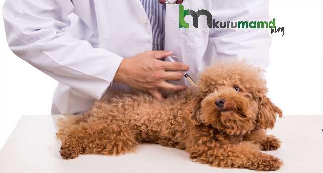Köpeklere Neden Aşı Yaptırılır?