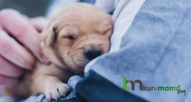 Yavru köpek aşısında dikkat edilmesi gerekenler
