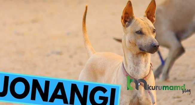 Jonangi Köpeği ve Özellikleri