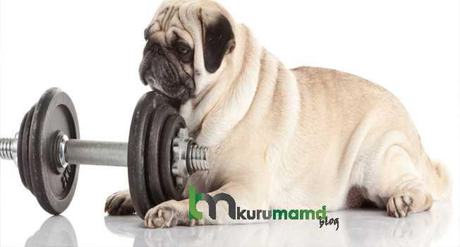 Egzersiz Yaptırmak