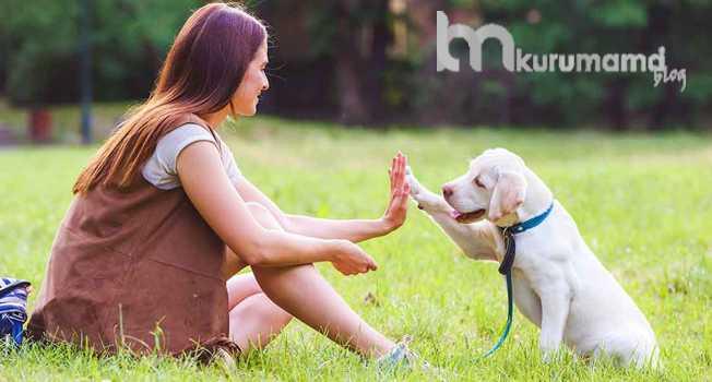 En İtaatkar 8 Köpek Irkı