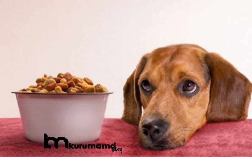 En İyi Yavru Köpek Maması Markaları