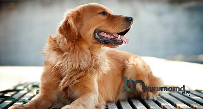 Köpeklerin Tüylerini Ne Sıklıkla Fırçalamalıdır
