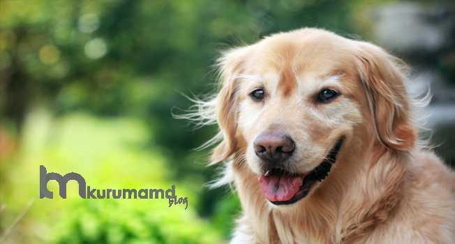 Köpeklerin Tüyleri Neden Fırçalamalıdır