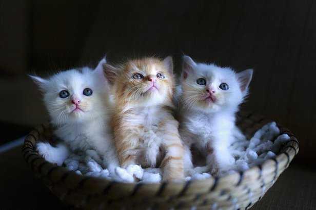 kedilerde ishal nedenleri