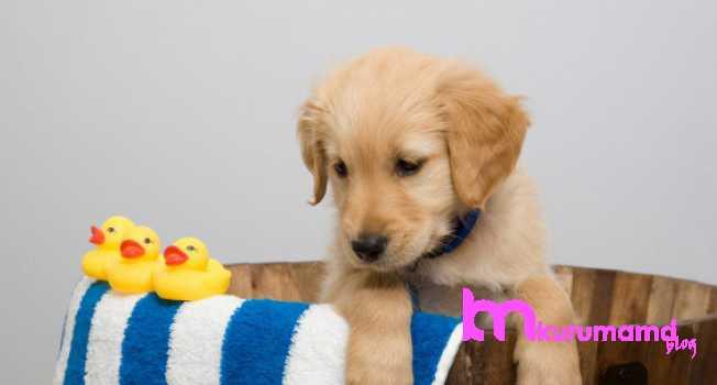 Yavru köpek banyo