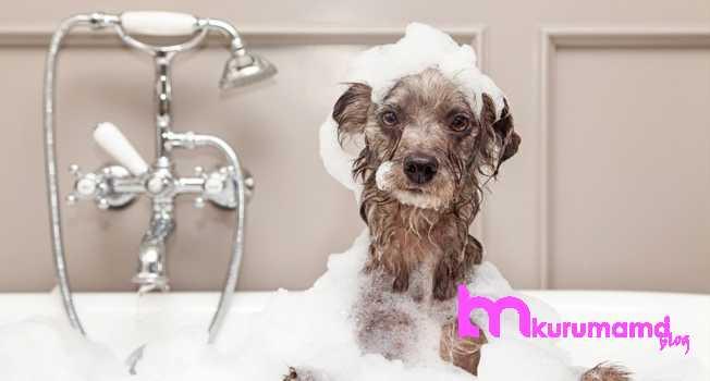 Yavru köpek nasıl yıkanır