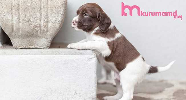 Yavru köpeklerin gelişim aşamaları