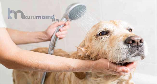 Köpekler Neden Yıkanır