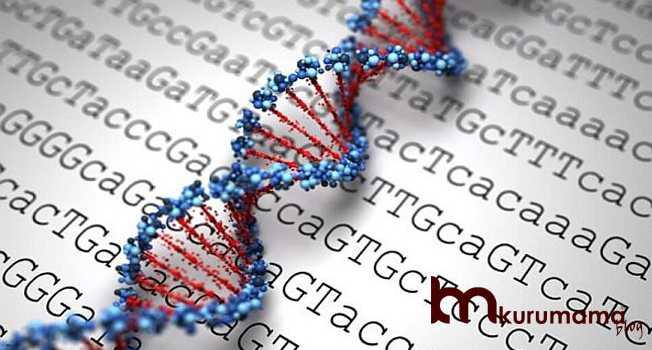 DNA testi