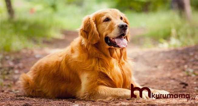 Köpeğin Orijinal Olup Olmaması Fark Eder mi?