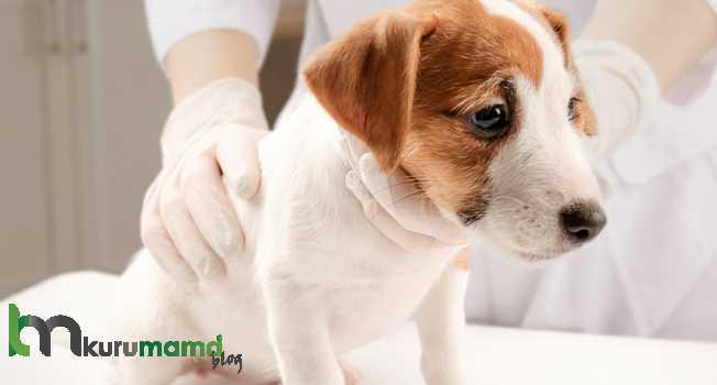 Köpekler kustuğunda hangi belirtilere dikkat edilmeli