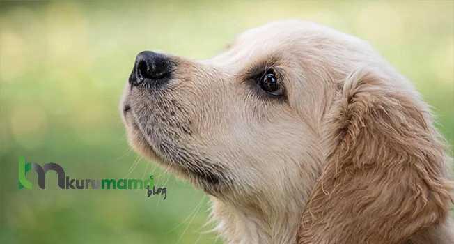 Köpekler Yıkanmaya Nasıl Alıştırılır