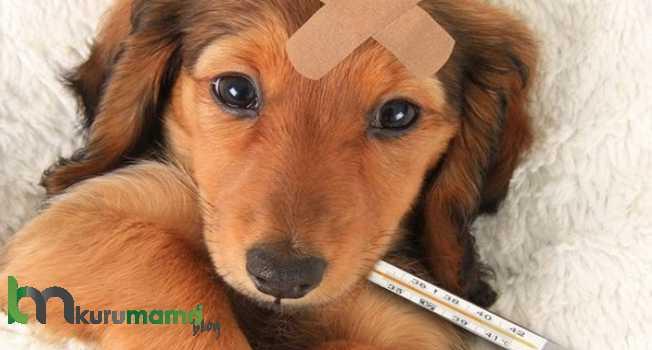Köpeklerde Kusmaya Ne İyi Gelir?Köpeklerde Kusmaya Ne İyi Gelir?