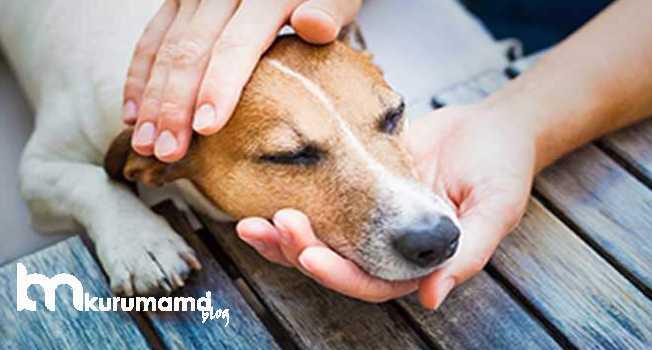 Köpeklerde Zehirlenme Belirtileri