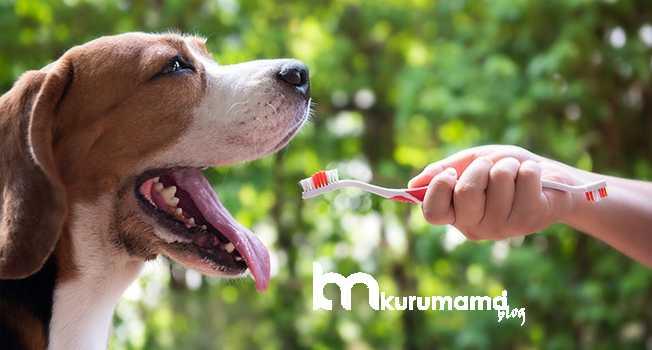 Köpeklere Uygun Diş Bakımı