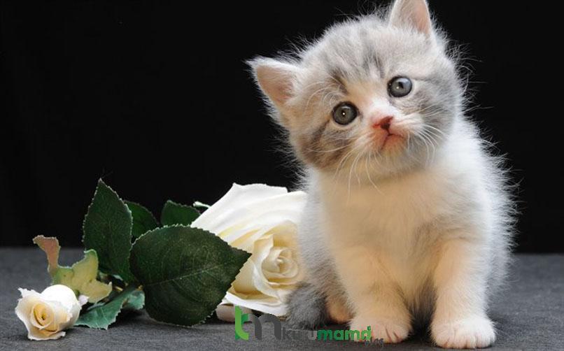 Munchkin Kedisinin Çocuklarla ve Diğer Hayvanlarla İletişimi