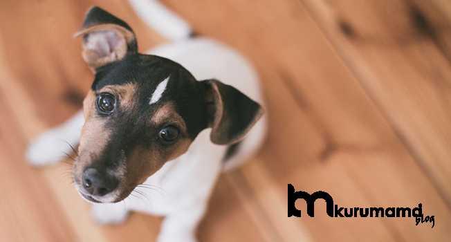 Köpek Sosyalleştirme Eğitimi Nedir?