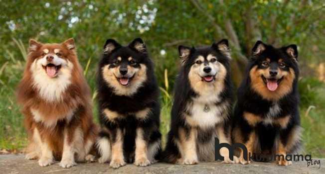 Standart köpek karşılaştırma