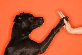 Köpeklerde Ödüllendirme ve Cezalandırma Nasıl Olmalı ?