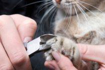 Kedilerin Tırnağı Nasıl Kesilir? Kedilerde Tırnak Kesimi
