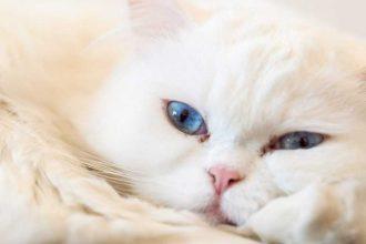 Kediler Neden Kusar? Kedim Kusuyor Ne Yapabilirim?