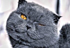 Kedilerde Stres Yaratacak Durumlar Nelerdir?