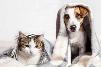 Soğuk Havalarda Evcil Hayvan Bakımı