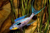 Akvaryum Balığı Alırken Dikkat Edilmesi Gerekenler