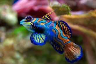 Akvaryum Balığı Besleme