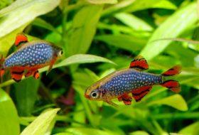 Akvaryum balıkları bir tutkudur