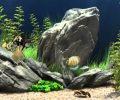 Rengârenk Balıkların verdiği huzur