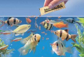 Balık yemi