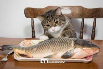 Omega-3 Bakımından En Zengin Mamalar: En İyi 5 Balıklı Kedi Maması
