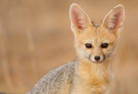 'En çılgın' 10 evcil hayvan