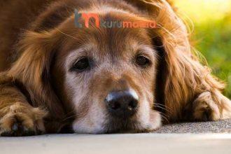Diş Hassasiyeti Yaşayan Köpekler İçin EN İYİ 5 Köpek Maması