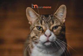 Kedilerde Eklem Ağrısı – Eklem Ağrıları İçin En İyi 5 Kedi Maması