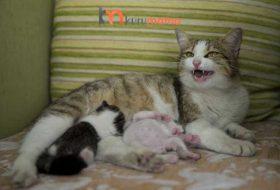 Emziren Kedilerde Beslenme: Emziren Kediler İçin EN İYİ 5 Mama
