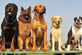 En çok satılan köpek maması