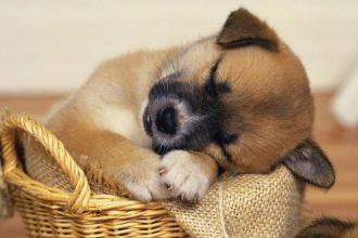 En Güzel Köpek Resimleri