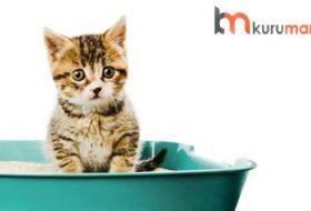 Kediler İçin Kum Kabı Seçimi: Tüm Detaylar (2020)