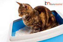 Kedi Kumu Nasıl Temizlenir? İşinizi Kolaylaştıracak 5 Muhteşem Ürün Tavsiyesi
